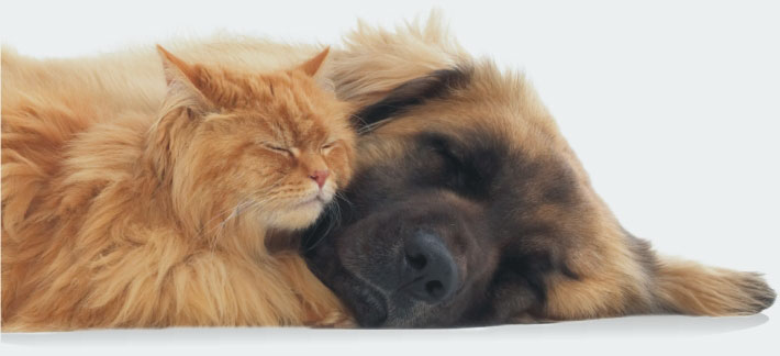 Sleeping_cat_and_dog